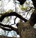 up_tree